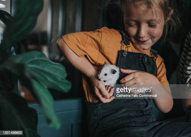 cute, confident young girl plays with a curious little hamster who peeks out from the side of her dungarees - limb body part stock pictures, royalty-free photos & images