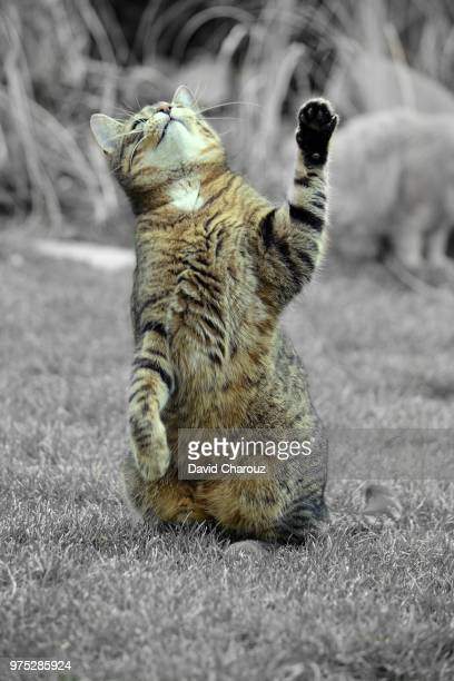 cute dancer cat - czech hunters stock pictures, royalty-free photos & images
