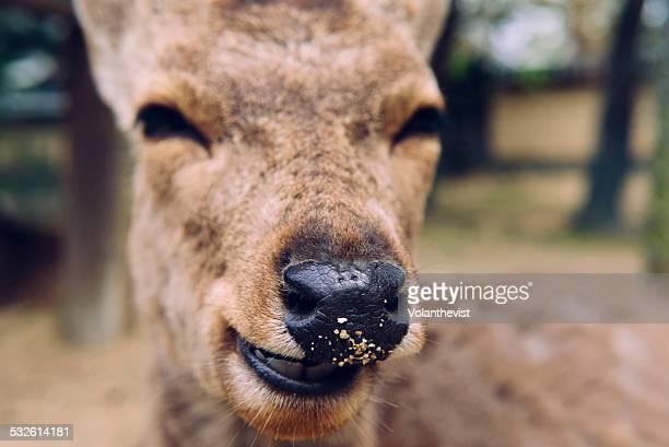 Cute deer in Nara Park, Japan