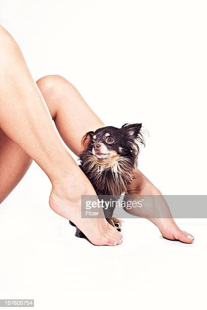 cute dog and beautiful legs white background