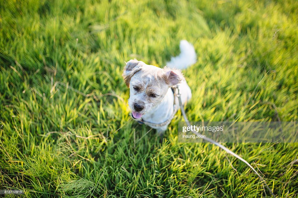 Cute Dog At Park : Stock Photo