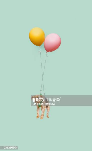 Cute dog floating tied to a balloon