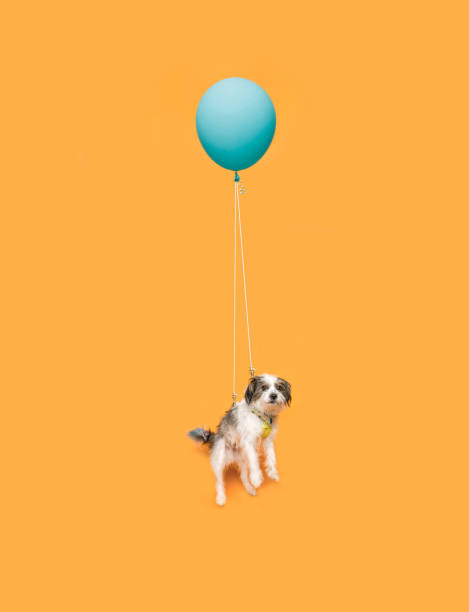 Cute dog floating with a balloon