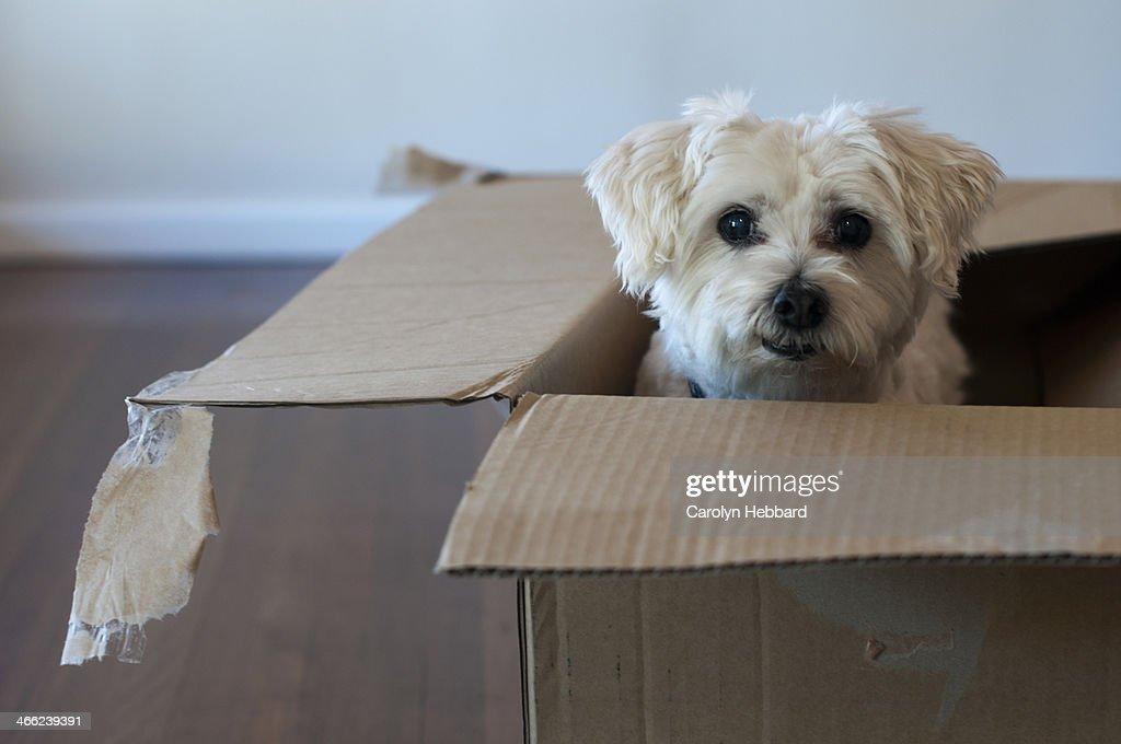Cute Dog in Cardboard Box : Stock Photo