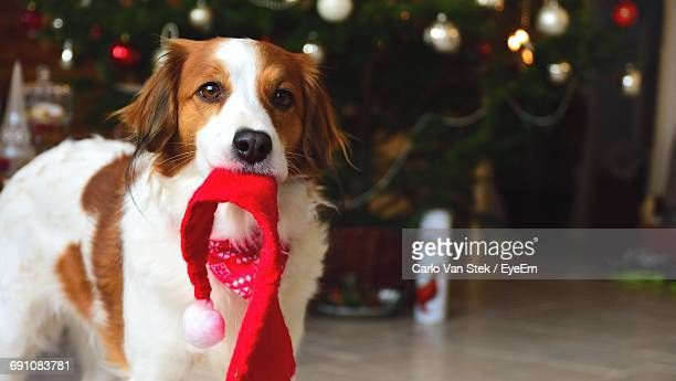 cute dog in front of christmas tree - christmas dog stock pictures, royalty-free photos & images
