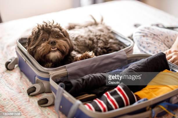 netter hund im offenen koffer - familia stock-fotos und bilder