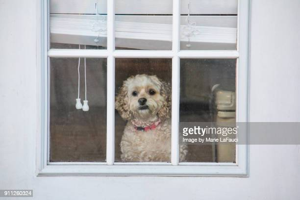 Cute dog looking through window door