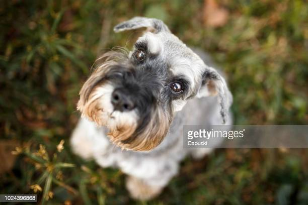 Cute dog looking up from above