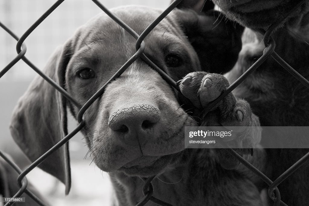 A cute dog needing to be saved behind a fence : Stock Photo