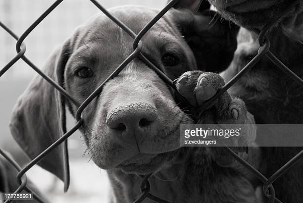 A cute dog needing to be saved behind a fence