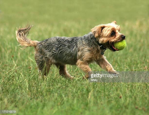 Mignon chien