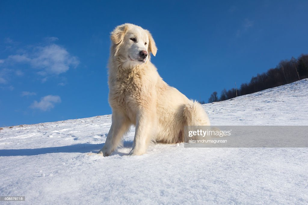Mignon chien : Photo