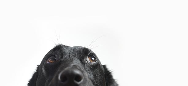 Cute Dog 533229488