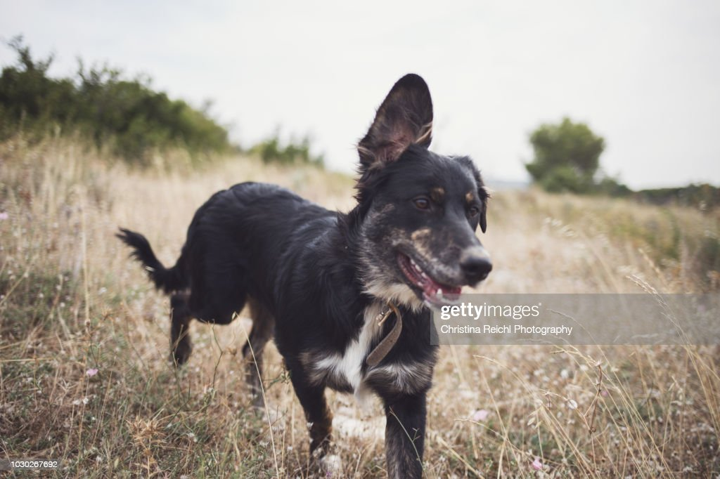 Cute Dog Running Freely In France Stock Photo Getty Images