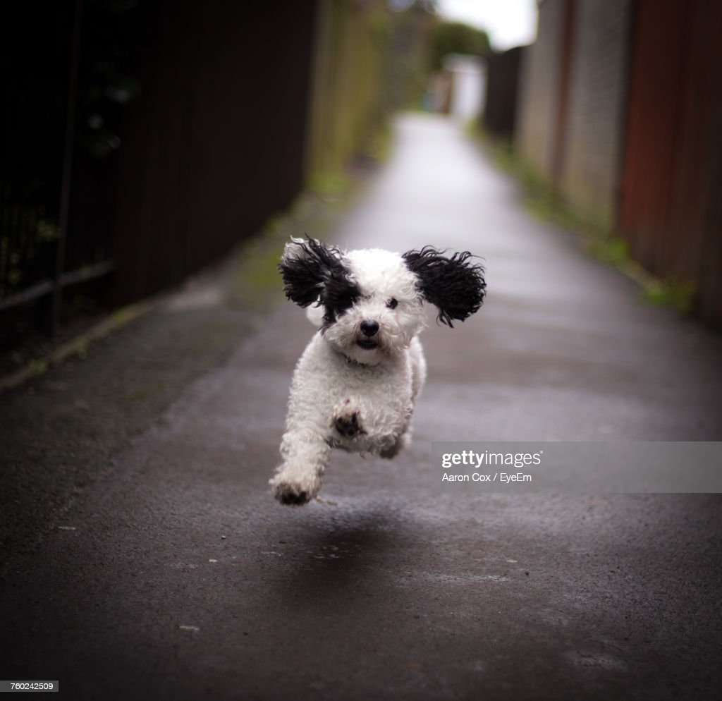 Cute Dog Running On Road Stock Photo Getty Images
