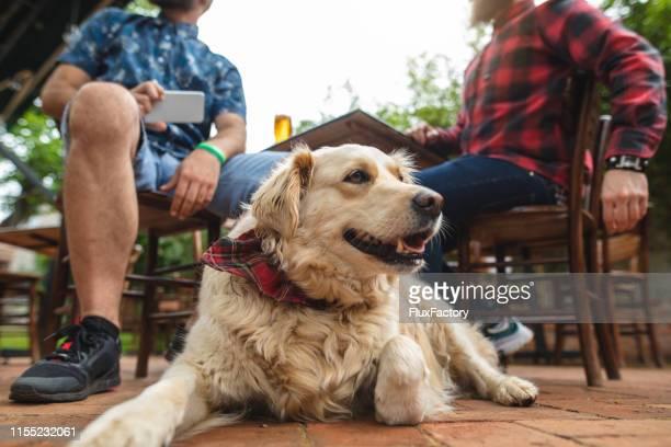 niedlicher hund sitzt mit seinem besitzer in einer örtlichen bierbrauerei - servicehund stock-fotos und bilder
