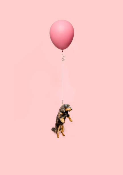 Cute dog tied to a balloon and floating
