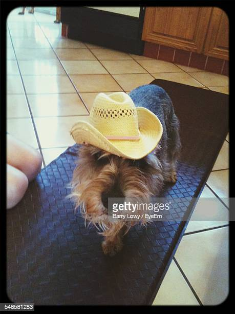 Cute Dog Wearing Straw Hat