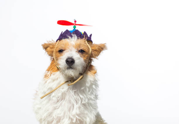 Cute Dog with Propeller Hat - The Amanda Collection