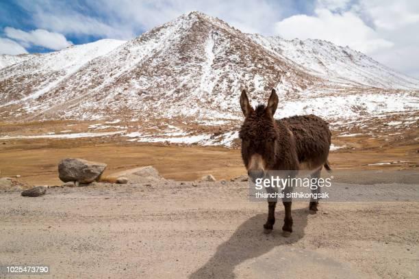 cute donkey - mula imagens e fotografias de stock
