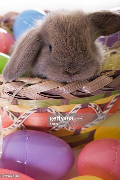 Cute Easter bunny on basket surrounded by Easter eggs