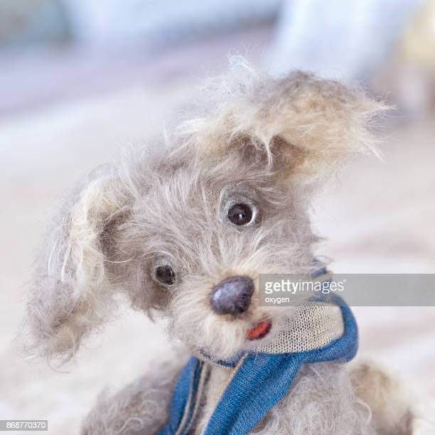 Cute Face of Small Gray Fur Toy Teddy Dog