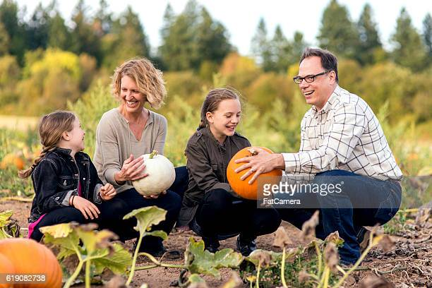 cute famiy laughing in the middle of a pumpkin patch - pumpkin patch stock photos and pictures
