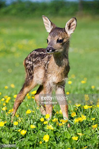 Cute fawn standing on grass