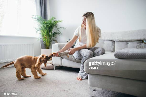 cute game of tug of war - playing stock pictures, royalty-free photos & images