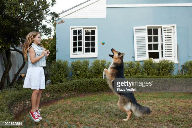 cute girl playing ball with her dog - pastore tedesco foto e immagini stock
