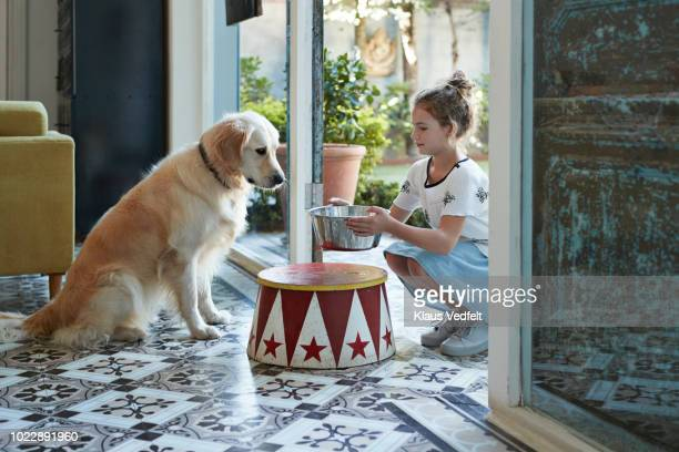 cute girl serving bowl of water for her golden retriever dog - animaux domestiques photos et images de collection