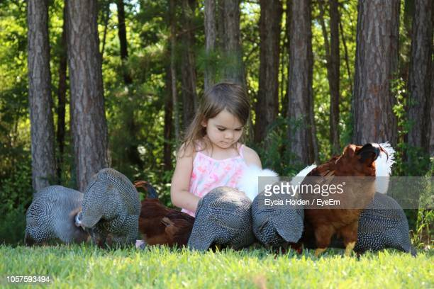 cute girl sitting amidst birds against trees - guinea fowl stock pictures, royalty-free photos & images