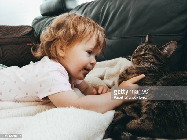 cute girl touching cat on sofa - baby stock pictures, royalty-free photos & images