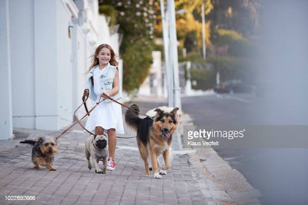 cute girl walking with dogs on the street - dog walker stock photos and pictures