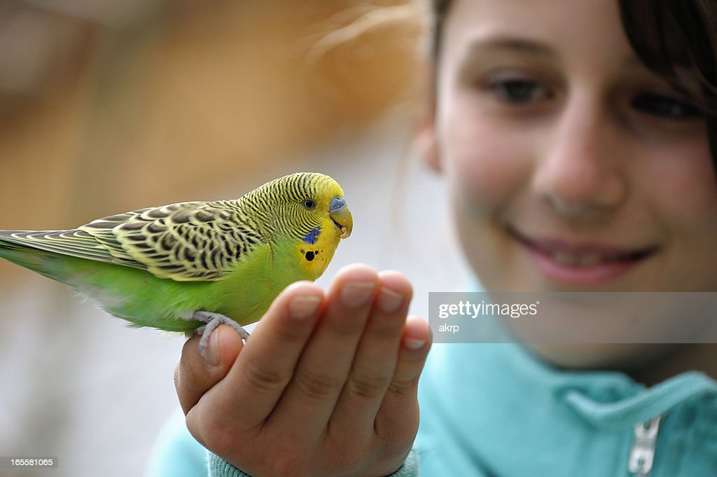 Cute Girl With A Budgie : Stock Photo