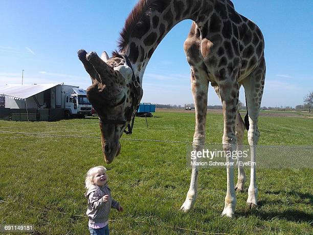 cute girl with giraffe on grassy field against sky - white giraffe stockfoto's en -beelden