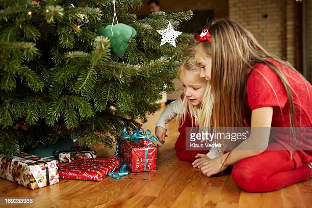 Cute girls grabbing presents under christmas tree