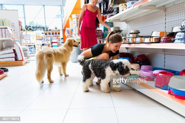 cute golden retriever and tibetan terrier in pet store - pet equipment stock pictures, royalty-free photos & images