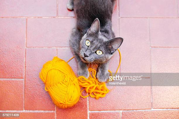 Cute gray cat playing with a ball of yellow yarn