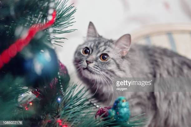 cute grey cat sitting on the chair near christmas tree - domestic animals stock pictures, royalty-free photos & images