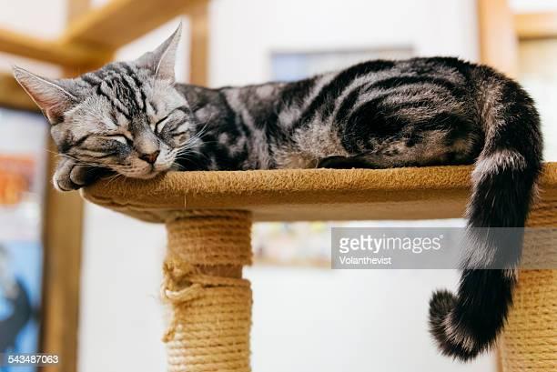 Cute grey cat sleeping on a platform