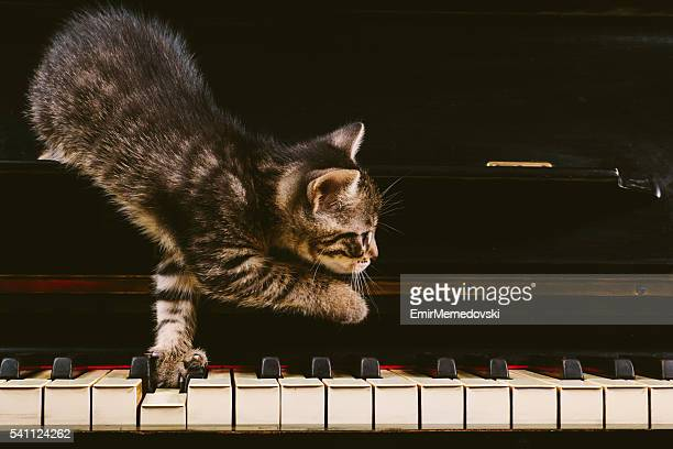 Cute grey striped kitten on piano keys.Side view. Close-up.