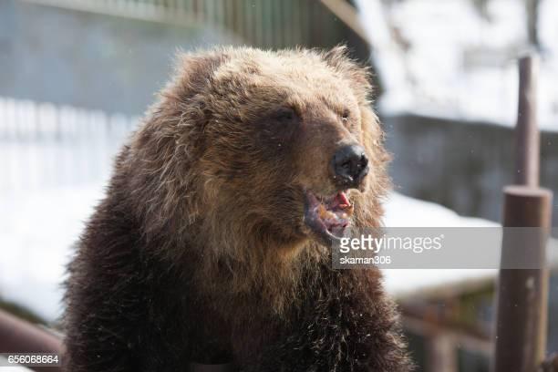 cute japanese bear in the bear  near Noboribetsu popular place for tourist