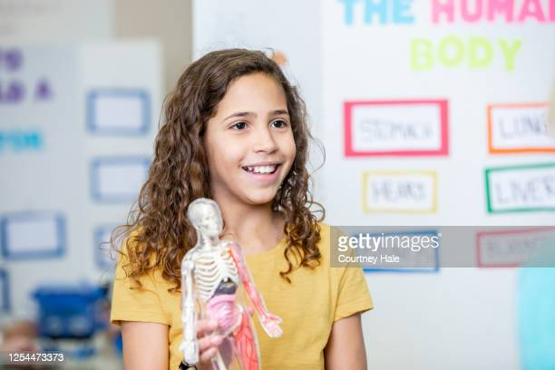cute junior high student holding model of the human body during class science fair - junior girl models stock pictures, royalty-free photos & images