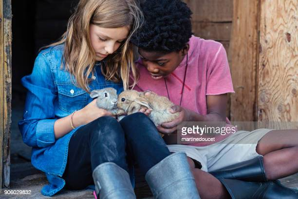 cute kids cuddling baby rabbits outdoors in spring. - african american easter stock photos and pictures