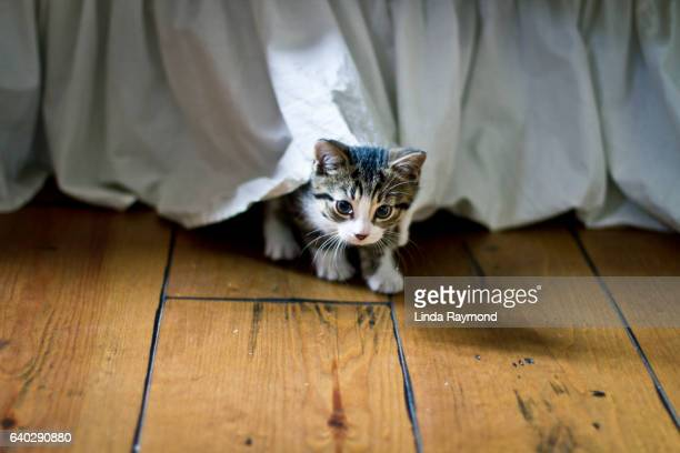 cute kitten hidding under a bed - cat hiding under bed stock pictures, royalty-free photos & images