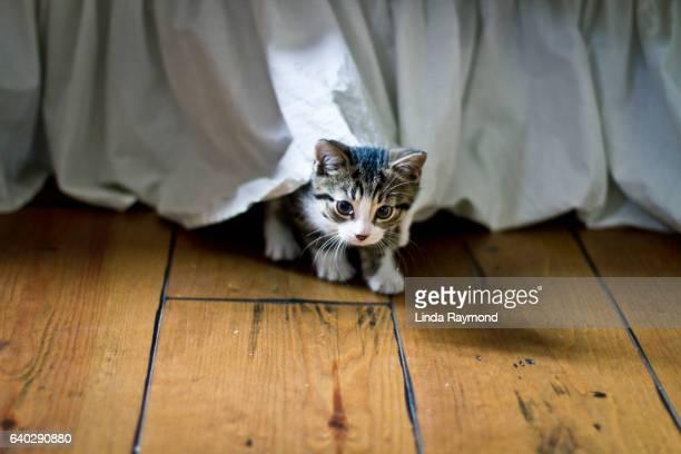 Cute kitten hidding under a bed
