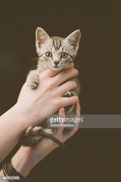 cute kitten in hands