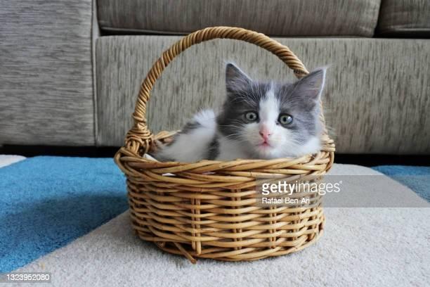 cute kitten relaxing inside a weaved basket - rafael ben ari - fotografias e filmes do acervo