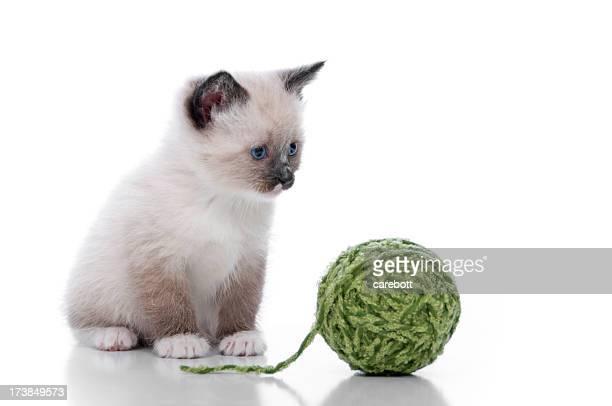 Cute Kittens Series